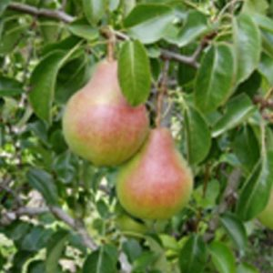kiwi-agriculture-raisonnee-ariege